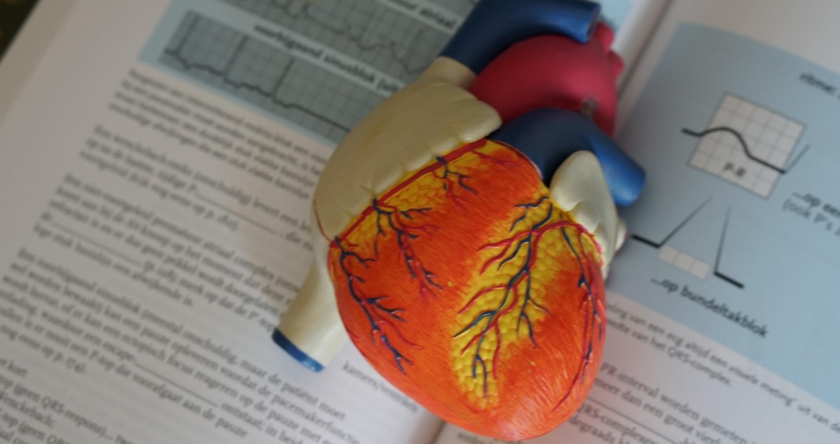 Das Herz mit CBD schützen
